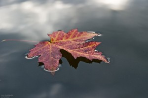 Jahreszeit__Herbst__Blatt__Baum__rot__farbig__Wasser__schwimmen